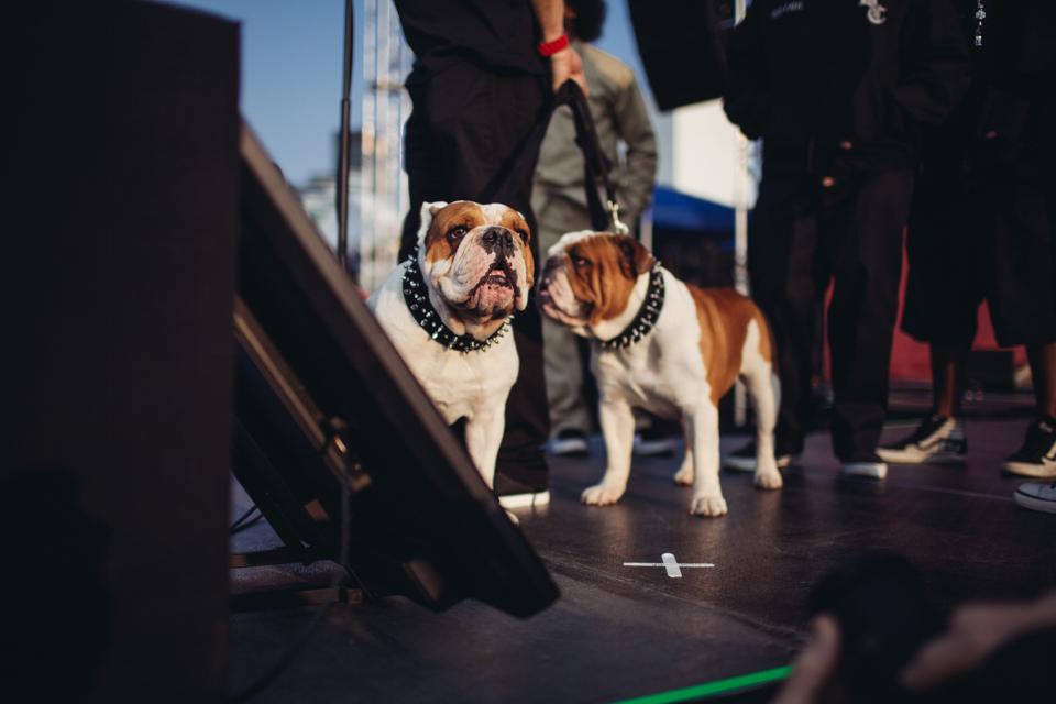 Ice T's dogs!